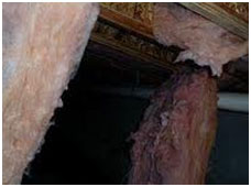 crawlspace animal damage