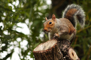 The Insiders Guide To Squirrel Control
