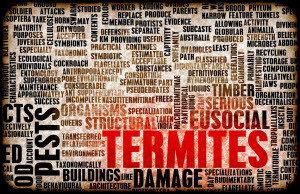 termite inspection for home purchase