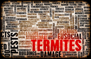 5 Reasons a Termite Inspection for a Home Purchase is So Important