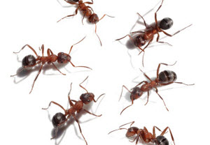 Wondering How to Eliminate Ants? Here's What You Need to Know
