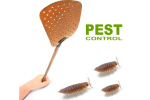Do You Have Summer Pests? How to Get Rid of Bugs in the House