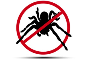 Don't Like Big and Scary? Tips for Wolf Spider Control