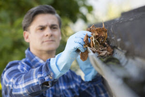 House Pest Control: How Can Gutter Protection Help Keep the Pests out of My Home?