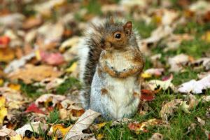Why You Should Hire A Professional For Dead Squirrel Removal