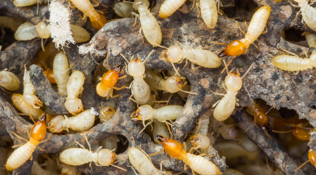 What The Best Termite Control Companies Know That You Don T