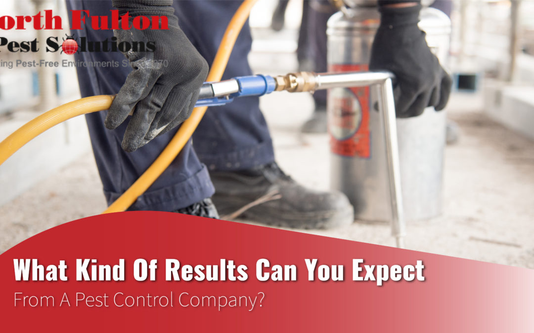 What Kind of Results Can You Expect from a Pest Control Company?