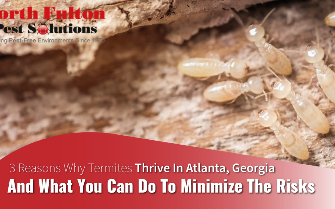 3 Reasons Why Termites Thrive in Atlanta, Georgia and What You Can Do to Minimize The Risks
