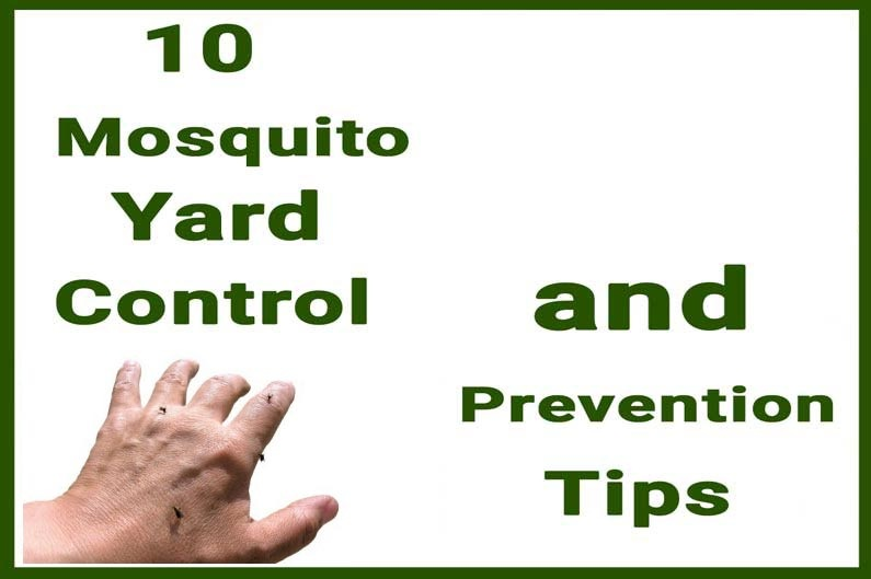 10 Mosquito Yard Control and Prevention Tips – North Fulton Pest Solutions